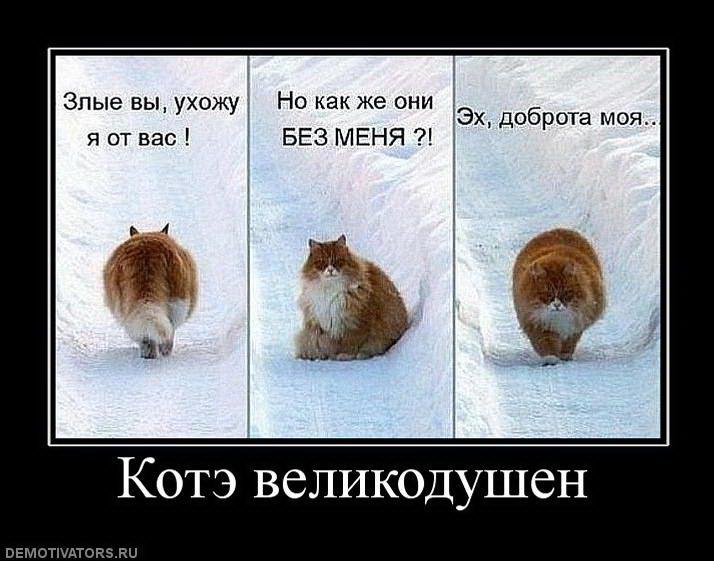 novye-prikolnye-demotivatory-pro-kote-s-nadpisyami-bez-matov-14