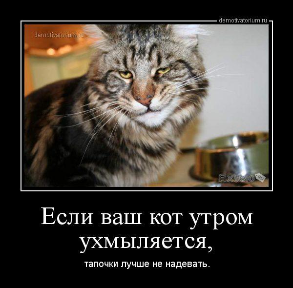 demotivatorium_ru_esli_vash_kot_utrom_uhmiljaetsja_42762