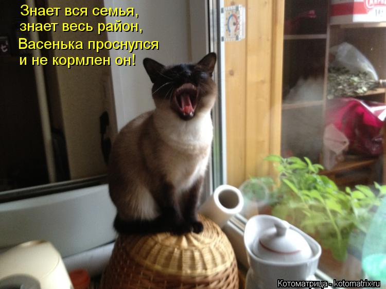 kotomatritsa_lc
