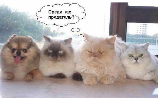 koty_i_sobaki_01