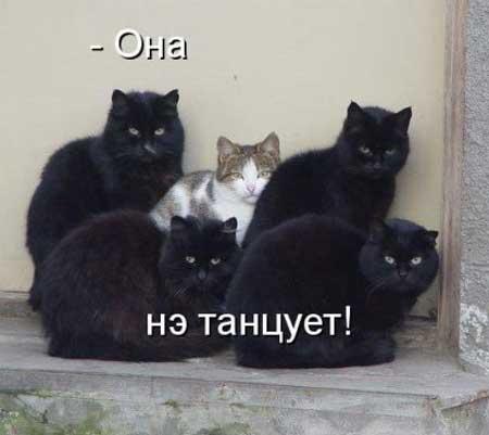 koty_s_nadpisyami_02