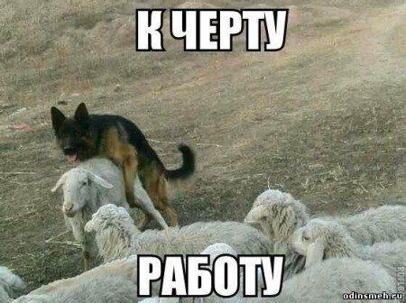 odinsmeh-ru_670