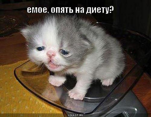 opyat-na-diyetu_1266291432