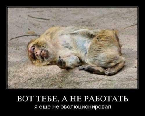 prikoly_pro_rabotu_16