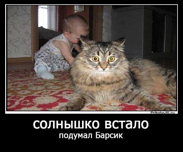 smeshnye_demotivatory_pro_koshek_15