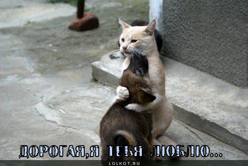 ya-tebya-lyublyu-_1323094532