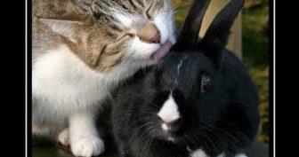 Прикольные картинки о дружбе (35 фото)