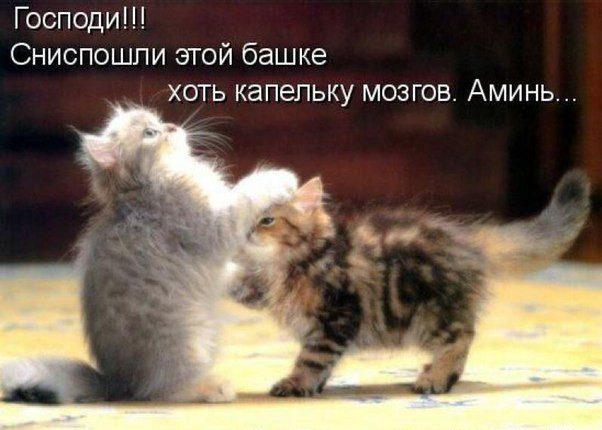 Картинки смешных котов и кошек и котят с надписями