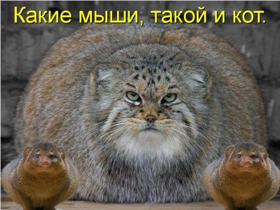 1268139889_stimka.ru_500336
