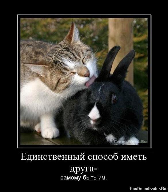 1284647459_716156_edinstvennyij-sposob-imet-druga