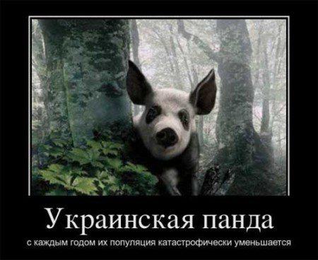 http://bipbap.ru/wp-content/uploads/2017/01/12c4befc78_8890-450x368.jpg