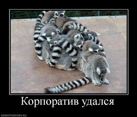 1316544125_318964_korporativ-udalsya