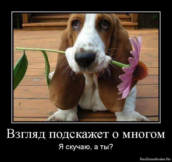 1329483269-vzglyad-podskazhet-o-mnogom