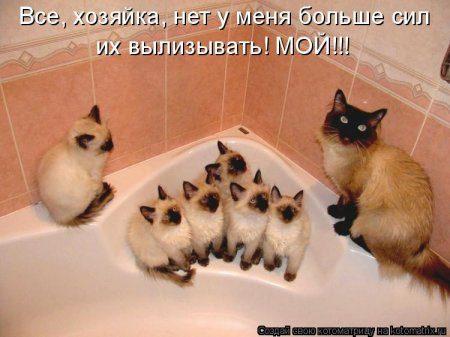 1330692112_kotomatrix_02