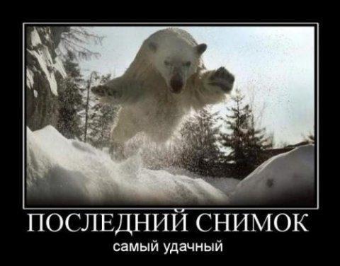 1347009201_smechnie_demotivatori_pro_jivotnih_527_77-66