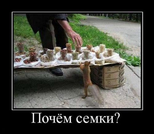 1347541694_smechnie_demotivatori_pro_jivotnih_527_777-12
