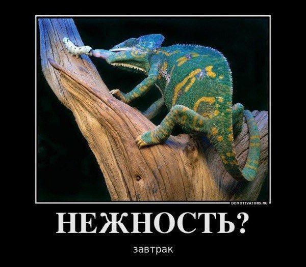 1354954645_demotivator5