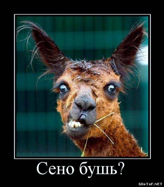 1370938347_demotivatori_pro_jivotnih-75