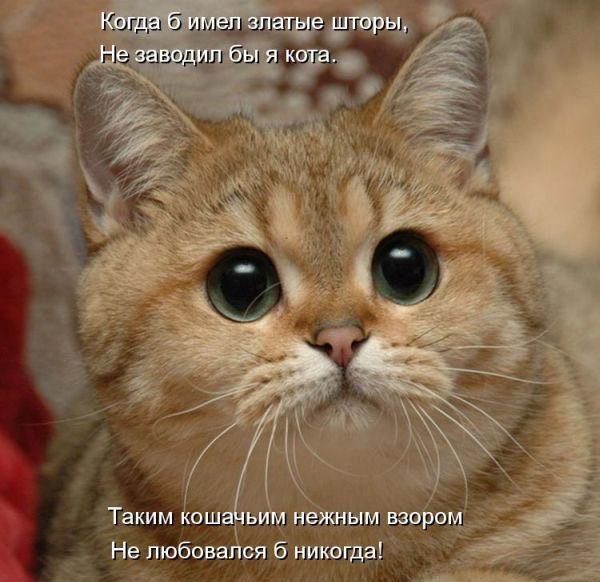 Гостевая книга  Шекснинская газета Звезда