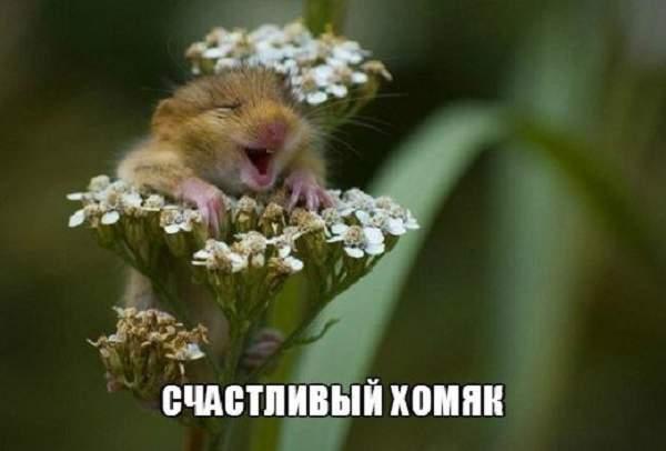 1437001546_zhiv1
