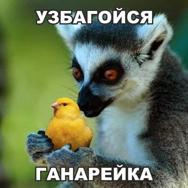 1437001585_zhiv