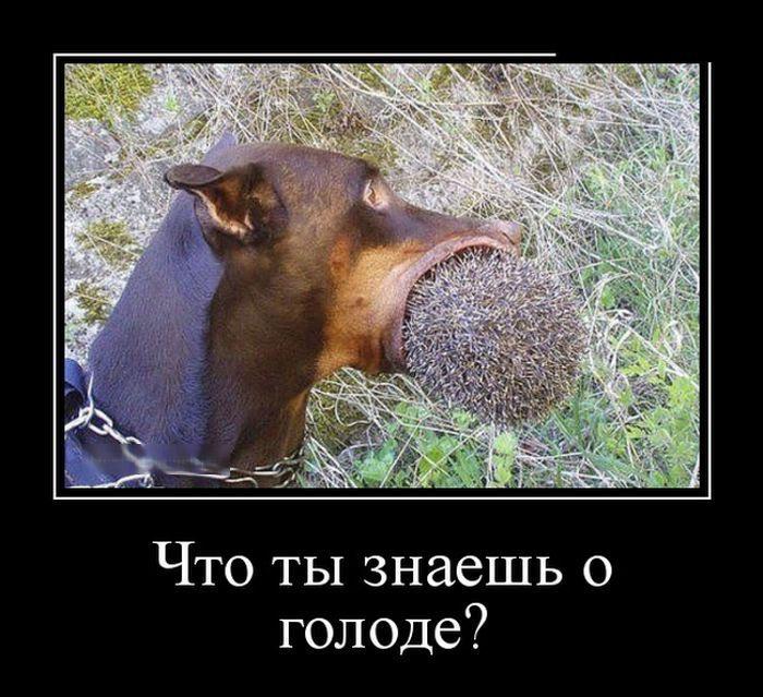 1449385486_prikolnye-demotivatory-1_xaxa-net.ru