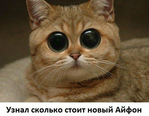 Скачать бесплатно прикольные картинки с животными на телефон 9