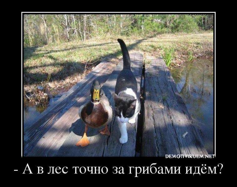 20143358_-a-v-les-tochno-za-gribami-idyom