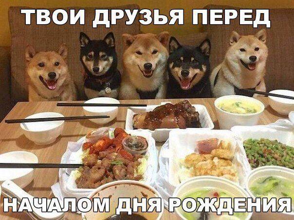 201608150001-tvoi-druzya-pered-nachalom-dnya-rozhdeniya-kashamalasha-com