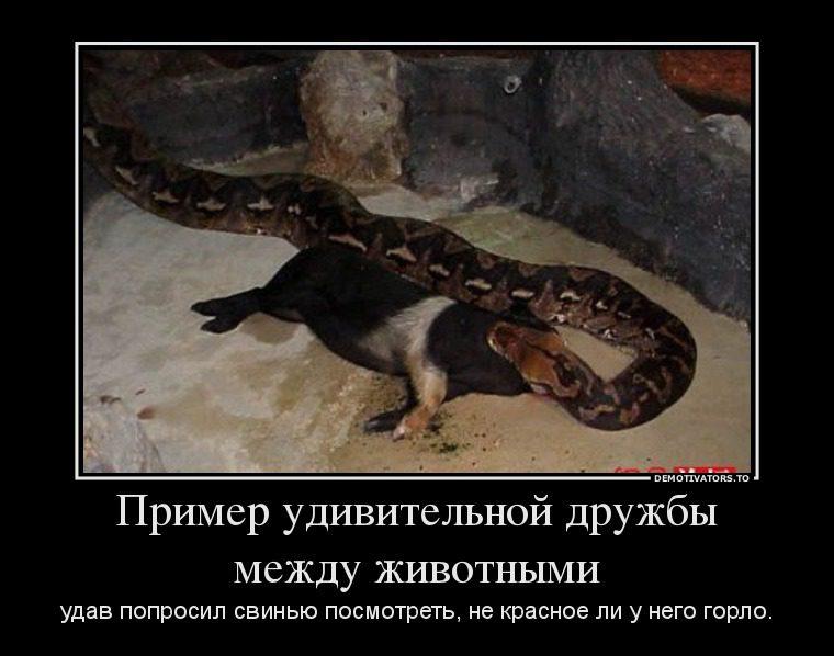 35153399_primer-udivitelnoj-druzhbyi-mezhdu-zhivotnyimi