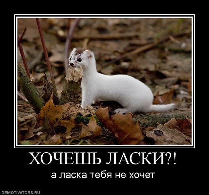 52868871_496406_hocheshlaski