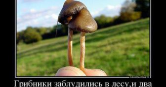 Прикольные картинки про грибников (43 фото)