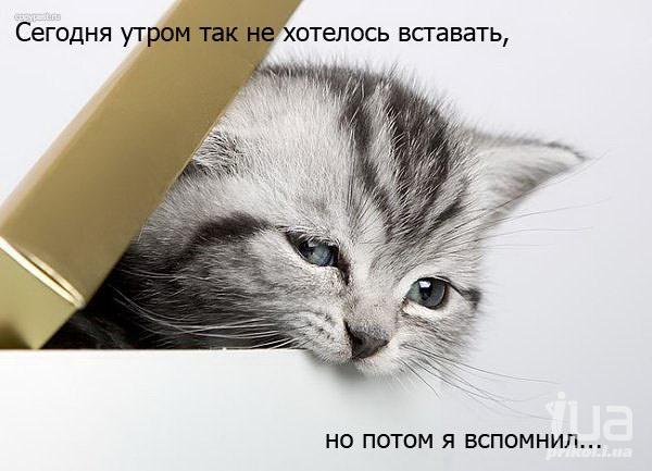 70847403_588482