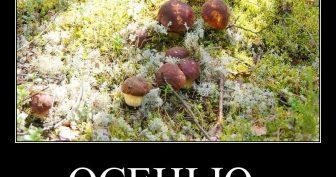 Прикольные картинки про грибы (38 фото)