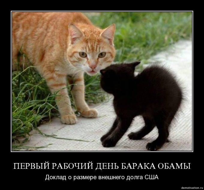 Demot_koteiko.ru_4