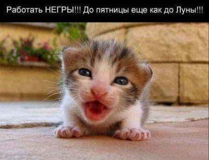 otkrytka_vtornik_11_cat220_b7f45b4etr