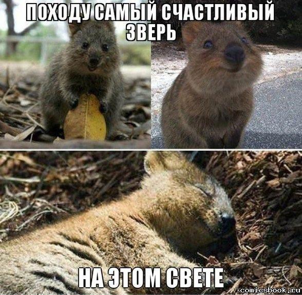 Прикол-Самый-счастливый-зверь-102549