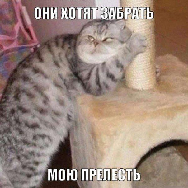 смотреть фото кошки приколы