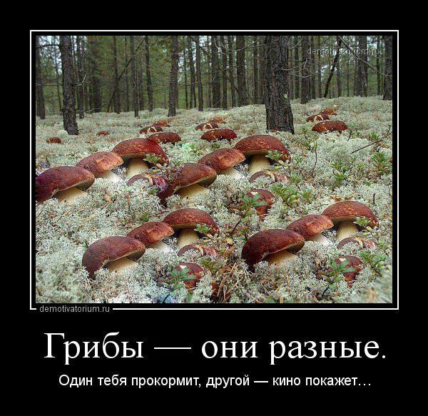 demotivatorium_ru_gribi__oni_raznie_43052