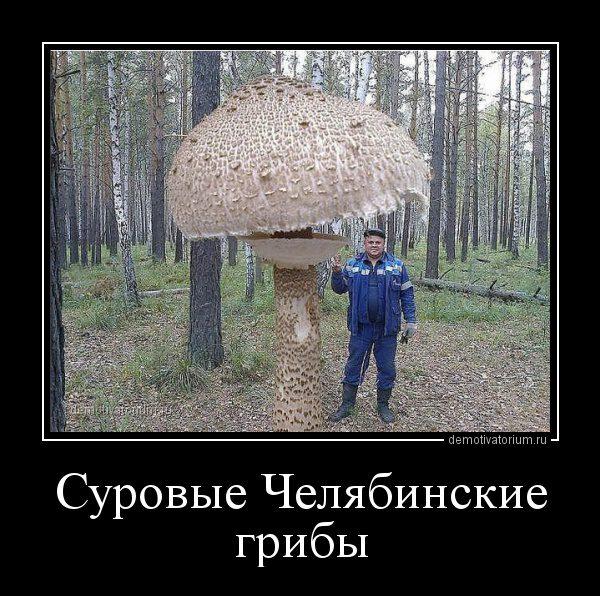 demotivatorium_ru_surovie_cheljabinskie_gribi_92887