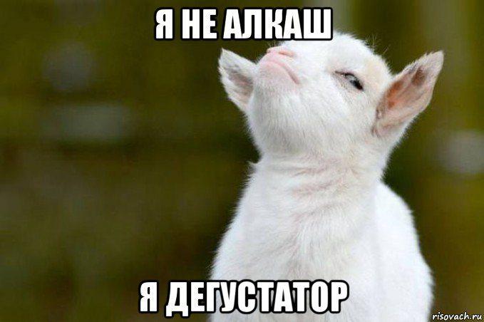 gordyy-kozlenok_108578746_orig_