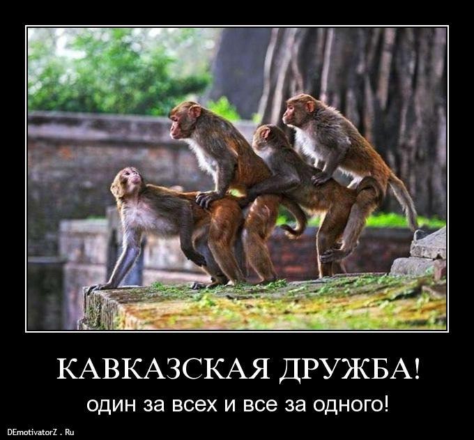 kavkazskaya-druzhba_3739_demotivatorz.ru
