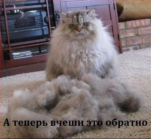 смотреть кошки приколы фото