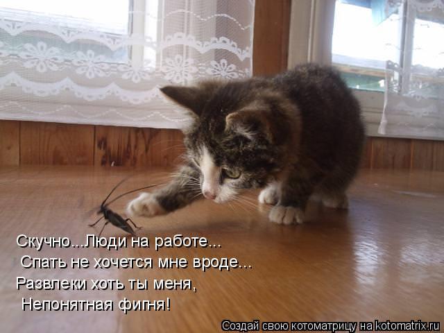 neponyatnaya-fignya-kotenok-stih