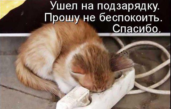 prikolnye-koty-i-sobaki-21