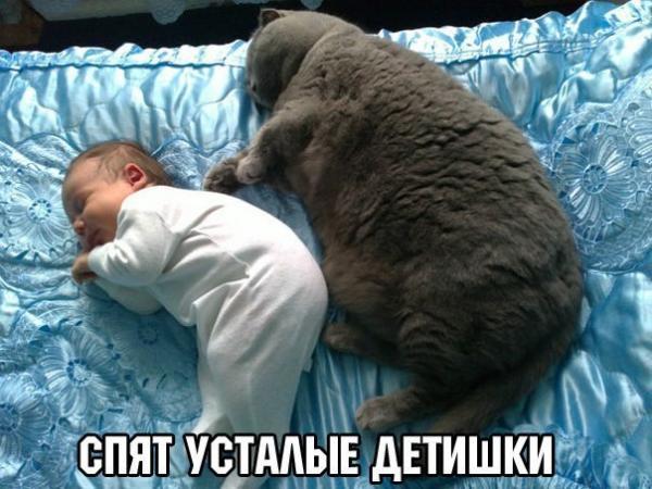 smeshnie_kartinki_142960731680