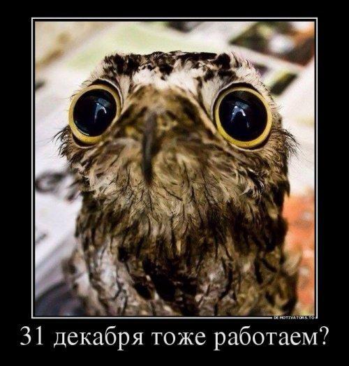 smeshnie_kartinki_145128378541