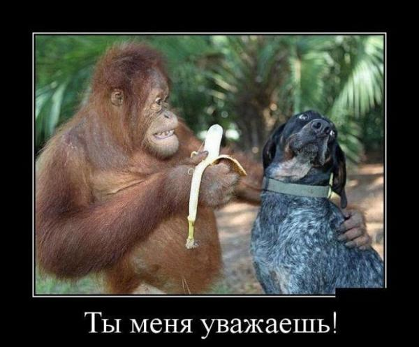 smeshnie_kartinki_145146029437