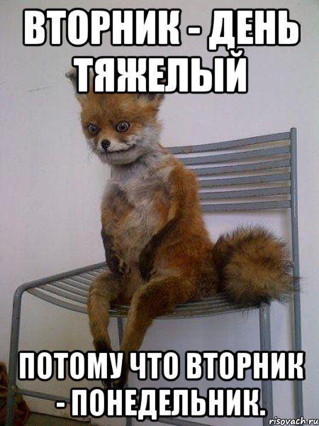 uporotaya-lisa_34033625_orig_