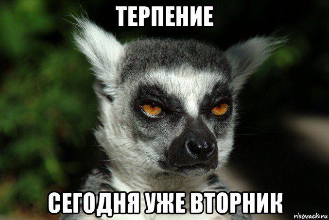 uzbagoisya_67865412_orig_